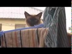 Cat Jump Fail with Music: Sail by AWOLNATION - YouTube