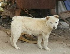 HELP US SAVE MORE DOGS LIKE VALENCIA FROM SLAUGHTER
