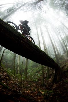 Joel Spackman at Snake in Cascadia, Washington, United States - photo by bradwalton - nature wood bridge Extreme sport outdoor adventure biker