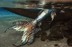 Image about aesthetic in aes; mermaid by Irene Mermaid Swim Tail, Siren Mermaid, Mermaid Cove, Mermaid Swimming, Mermaid Diy, Mermaid Island, Magical Creatures, Fantasy Creatures, Realistic Mermaid Tails