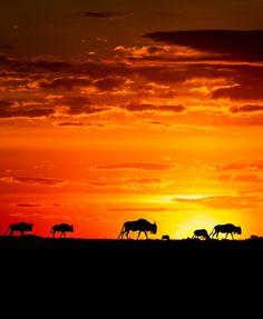 oecologia:      African Sunset | Richard Costin