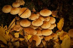 Autumn Treasure October 2013, Autumn, Website, Facebook, Vegetables, Twitter, Google, Photos, Pictures