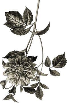 Black Flowers, Bunch Of Flowers, Flower Art Images, Cashmere Shawl, Botanical Flowers, Border Design, Islamic Art, Paisley Print, Watercolor Flowers