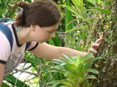 Dois alcaloides efetivos no tratamento da leucemia infantil são encontrados nessa espécie: vincristina e vimblastina.  Catharanthus roseus (L.) G. Don  http://hoomaluhia.altervista.org/catharanthus-roseus/