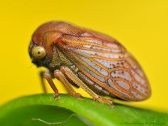 Treehopper by Rundstedt B. Rovillos