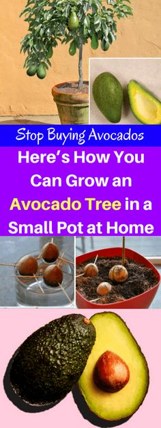 A healthy trend always comes to the market and sometimes never last for a long time. However, eating avocado is one of the trends which lasted for a huge period due to all health benefits of avocado. People really feel it is worthwhile to consume avocado as it is a rich source of potassium, vitamin …