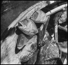 https://flic.kr/p/FmWV2W | Ψάρια, Μύκονος, 1950 - 1955. | Βούλα Παπαϊωάννου, Φωτογραφικό Αρχείο Μουσείου Μπενάκη.