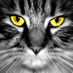 'Cats eye' by Sophie Watson Cat Eye, Art Work, Eyes, Photography, Image, Artwork, Work Of Art, Photograph, Fotografie