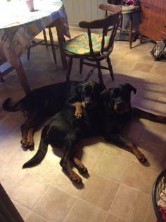 Mine dejlige hunde elsker dem