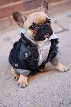Don't normally like animals in clothes, but this little guy (?) is just too cute!
