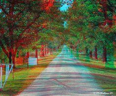Pine Line 50mm, via Flickr.