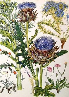 Gorgeous vintage botanical print. by lola