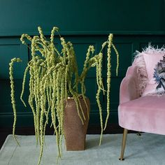 Join the trend for indoor greenery with these artificial green amaranthus sprays. They look seriously stunning grouped in a bouquet for maximum drama. Trailing Flowers, Tropical Interior, Amaranthus, Spray Can, Making Waves, Lush Green, Plant Hanger, Color Splash, House Plants