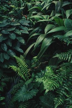 Botanical / Greenery / plants – plantes // verdure — JUNGLE - All About Phone Backgrounds, Wallpaper Backgrounds, Samsung Wallpapers, Plant Wallpaper, Nature Wallpaper, Bohemian Wallpaper, Painting Wallpaper, Plant Aesthetic, Flower Quotes