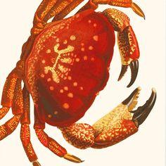 crab art print by buy the sea   notonthehighstreet.com