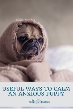Puppy Care, Pet Puppy, Happy Puppy, Happy Dogs, Pug Puppies For Sale, Clean Funny Memes, Pug Pictures, Pug Pics, Dog Hacks