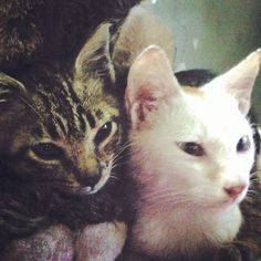 My pet cats Jandi and Dao Ming - (Photo from the Instacanvas gallery of itok_del_mundo.)