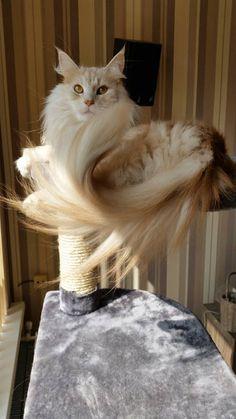 My beautiful tail
