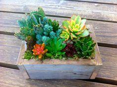 Multi-Colored Succulent Box-so pretty. Got to get some more colorful succulents