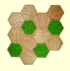 Kompozycja - drewniane panele ścienne dąb natura + chrobotek reniferowy mech fiński. Dekoracje z mchu na ścianę. Panele z mchu.
