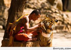 Shaolin Monk and a tiger - DayLoL.com - Your Daily LoL!