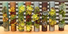 Fiori Cylinders
