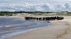 Playa en Riachuelo, Dpto. de Colonia. Fotografía de Alejandro J. Ceppi