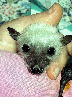 Sweet little bat face...