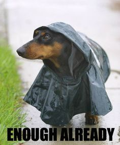 Seriously. Stop raining… Oh....My PenniLou would have loved this jacket!