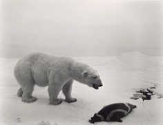 Sugimoto's Polar Bear --  one of his photos shot from a diorama at  the American Museum of Natural History.  Without the didactic materials surrounding each display,  these works create the illusion that the animals were photographed in their natural habitats.