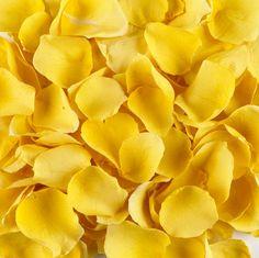 Petals ღYellow Lovinღ
