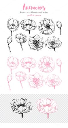 15 ideas birthday card illustration hand drawn save the date for 2019 Botanical Line Drawing, Floral Drawing, Botanical Drawings, Botanical Illustration, Botanical Art, Flower Drawing Tutorials, Flower Sketches, Flower Tutorial, Art Tutorials