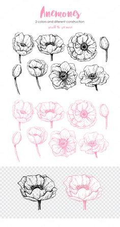 Anemone. Hand Drawn Flower Set by Epine on @creativemarket