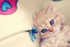I don't usually like cats...but I have to admit that's pretty cute(: