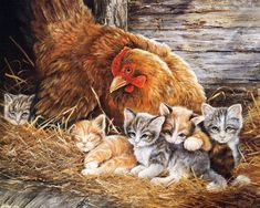 HOME BEAUTY diamond embroidery kits diy diamond painting animals mosaic pattern picture of rhinestones crystals cats Farm Animals, Cute Animals, Image Chat, Chicken Painting, Arte Country, Country Life, Country Style, Images Vintage, Gatos Cats
