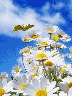 Daisies, daisies, daisies.