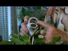 Houseplants #3: Tools for testing soil moisture