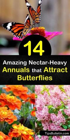 Discover gorgeous annuals that attract hummingbirds with sweet honey-scented flowers. Plant heliotrope and salvia to draw in butterflies with bright hues. Learn how to grow plants like phlox and verbena to appeal to pollinators. #annuals #attract #butterflies Flowers That Attract Butterflies, Butterfly Weed, Love The Earth, Ground Cover Plants, How To Attract Hummingbirds, Annual Flowers, Black Eyed Susan, Verbena, Salvia