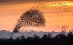 Soaring populations put four species in 'billion bird club' Barn Swallow, House Sparrow, Starling, Wild Ones, Bird Species, Conservation, Birds, Club, Animals