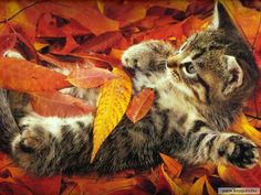 Image result for happy tuesday fall images