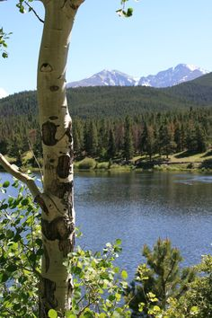 Lilly Lake near Estes Park, CO....Where my Son was married...right on the lake. Beautiful!