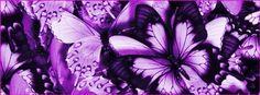 Purple Butterflies~