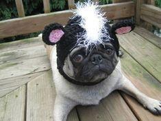 Mützen für Hunde hundemode hundebekleidung mops