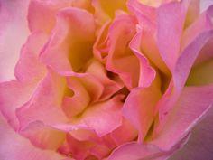 Sommer und Rosenduft im Garten und dazu ein Glas kühler Rose von Rotkäppchen - das ist Sommer pur !
