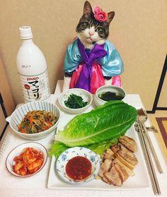 I made Korean cuisine #cat##cats#catstagram#catsofinstagram #instacat_meows#instacat_models#bestmeow#sweetcatclub#にゃんすたぐらむ#ねこ#猫 #ネコ#みんねこ#ふわもこ部#picneko#chef #food#koreanfood#韓国料理#チマチョゴリ #マッコリ#サムギョプサル#チャプチェ#キムチ #ワカメスープ#ナムル#mannishboys #斉藤和義
