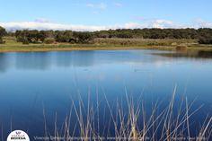 Vivencia Dehesa, finca Valdepajares de Tajo http://www.vivenciadehesa.es/ #extremadura #ecoturismo #birdwathing  #paisajes #fotografia #naturaleza