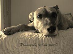 Dogtography~by Kala Howard