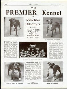 STAFFORDSHIRE BULL TERRIER OUR DOGS OLD 1944 DOG BREED KENNEL