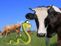 Interesting article. I hope we make sense of this soon. Study: Cows Are 25 Percent Snake | Mother Jones
