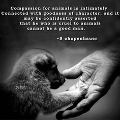 """Compassion for animals is intimately connected with goodness of character; and it may be confidently asserted that he who is cruel to animals cannot be a good man."" - S Chopenhauer"